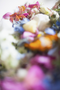 Close-up of multi colored fresh flowersの写真素材 [FYI04323501]