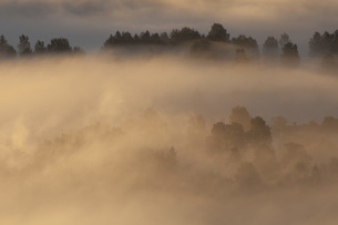 Idyllic view of fog covered landscape during sunsetの写真素材 [FYI04323634]