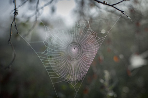 Close-up of spider web on branchの写真素材 [FYI04323641]