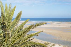 Tranquil, idyllic scene tropical palm tree and sunny ocean beach, Cacela Velha, Algarve, Portugalの写真素材 [FYI04323751]