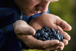 Man cupping and smelling fresh, ripe blueberriesの写真素材 [FYI04323771]