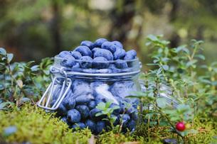 Fresh, ripe blueberriesの写真素材 [FYI04323773]