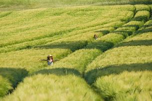 Carefree girls running in sunny, idyllic green rural wheat fieldの写真素材 [FYI04323803]