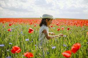 Curious girl in sunny, idyllic rural red poppy fieldの写真素材 [FYI04323820]