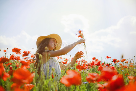 Girl picking red poppy flowers in sunny, idyllic rural fieldの写真素材 [FYI04323830]