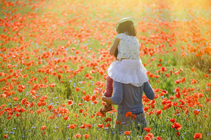 Father carrying daughter on shoulders in sunny, idyllic rural field with red poppy flowersの写真素材 [FYI04323836]
