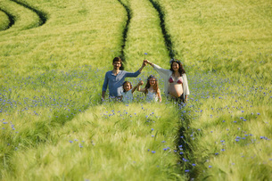 Portrait pregnant family in sunny, idyllic rural green field with wildflowersの写真素材 [FYI04323837]