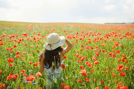 Girl walking in sunny, rural red poppy fieldの写真素材 [FYI04323852]