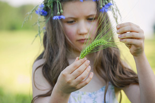 Curious girl holding green wheat stalkの写真素材 [FYI04323874]