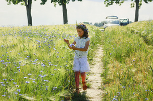 Girl picking purple wildflowers in sunny, idyllic rural fieldの写真素材 [FYI04323876]