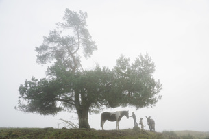 Girl with dog, donkey and horse under rural tree in foggy fieldの写真素材 [FYI04323919]