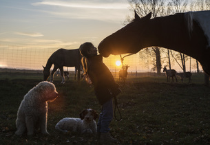 Silhouette girl and horse kissing on farm at sunsetの写真素材 [FYI04323924]