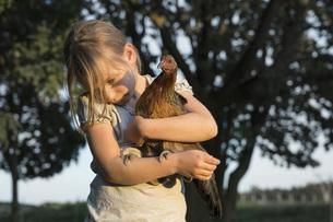 Girl holding Bush Hen on farmの写真素材 [FYI04323926]