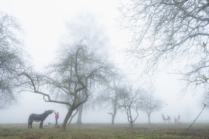Girl with dog and donkey on foggy rural farmの写真素材 [FYI04323928]