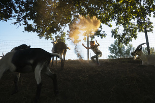 Girl playing with goats on rural farmの写真素材 [FYI04323929]