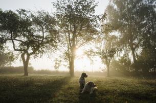 Spanish Water Dogs in idyllic rural field at sunriseの写真素材 [FYI04323931]