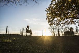 Girl standing on goat on rural farm at sunsetの写真素材 [FYI04323940]