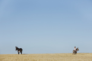 Girl riding donkey in sunny rural fieldの写真素材 [FYI04323944]