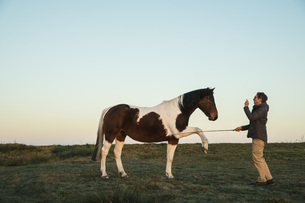 Woman training brown and white horse in rural fieldの写真素材 [FYI04323945]