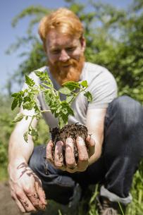 Man with beard holding sapling in sunny gardenの写真素材 [FYI04323957]