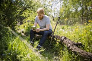 Man with beard using digital tablet in sunny gardenの写真素材 [FYI04323980]