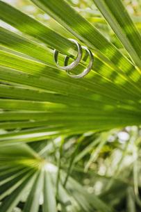 Wedding rings on green fern leafの写真素材 [FYI04323981]