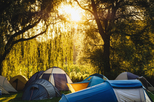 Tents under sunny trees at campsiteの写真素材 [FYI04324020]