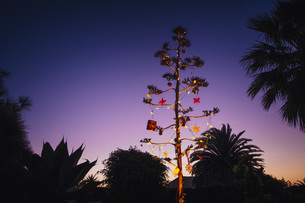 Agave blossom tree decorated with Christmas ornaments, Costa Teguise, Lanzarote, Spainの写真素材 [FYI04324096]