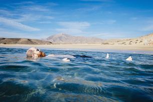 Carefree man floating in blue ocean water, Papagayo Beach, Lanzarote, Canary Islands, Spainの写真素材 [FYI04324100]
