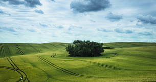 Scenic view green farmland and stand of trees, Brandenburg, Germanyの写真素材 [FYI04324109]