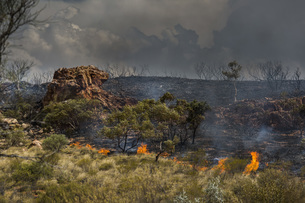 Wildfire burning, East McDonnell Ranges, Alice Springs, Northern Territory, Australiaの写真素材 [FYI04324185]