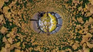 神宮外苑銀杏並木の360度風景写真の写真素材 [FYI04330417]