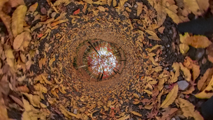 平林寺の紅葉の360度風景写真の写真素材 [FYI04330420]