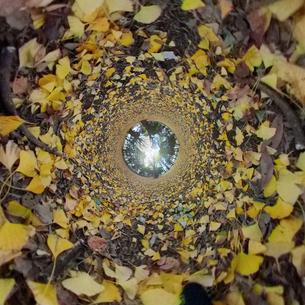 代々木公園の紅葉した落葉の360度風景写真の写真素材 [FYI04330421]