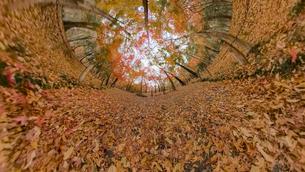 平林寺の紅葉のワイド風景写真の写真素材 [FYI04330423]