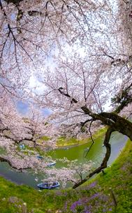 満開の桜の時期の千鳥が淵のワイド風景写真の写真素材 [FYI04330425]
