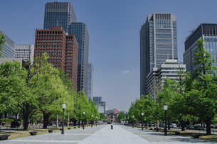 新緑の行幸通りと東京駅の写真素材 [FYI04330447]