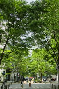 新緑の丸の内仲通りと街並みの写真素材 [FYI04330464]
