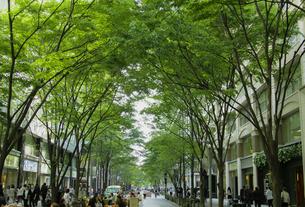 新緑の丸の内仲通りと街並みの写真素材 [FYI04330465]