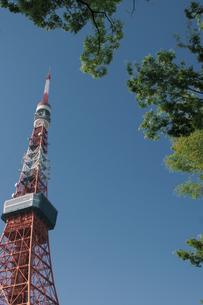 東京タワーと新緑の写真素材 [FYI04330469]