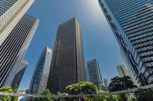 西新宿の高層ビル群と新緑の写真素材 [FYI04330476]