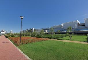 豊洲ぐるり公園と豊洲市場の写真素材 [FYI04330519]