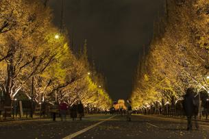神宮外苑イチョウ並木の夜景の写真素材 [FYI04330562]