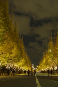 神宮外苑イチョウ並木の夜景の写真素材 [FYI04330565]