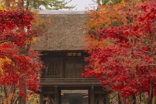 平林寺境内の紅葉の写真素材 [FYI04330567]
