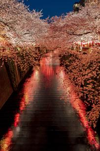 目黒川の桜並木の夜景の写真素材 [FYI04330635]
