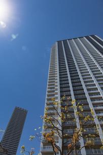 東池袋のタワーマンションと青空の写真素材 [FYI04330653]