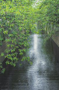 新緑の目黒川の写真素材 [FYI04330660]