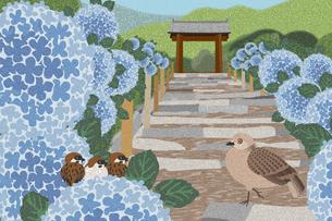 紫陽花の花咲く明月院 イラストのイラスト素材 [FYI04330733]