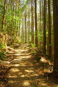 森林浴の写真素材 [FYI04330860]